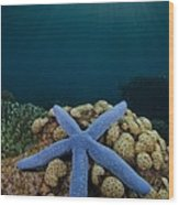 Blue Starfish In Indonesia Wood Print