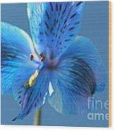 Blue Summer Wood Print