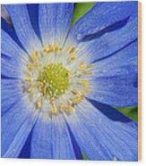 Blue Swan River Daisy Wood Print