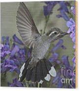 Blue-throated Hummingbird Wood Print