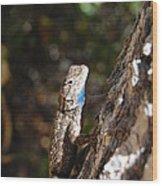Blue Throated Lizard 4 Wood Print