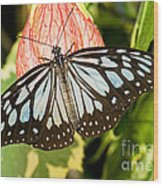 Blue Tiger Butterfly Wood Print