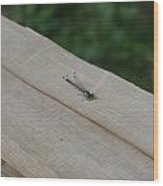 Blue Tipped Dragon Fly Wood Print