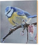 Blue Tit And Blossoms Wood Print