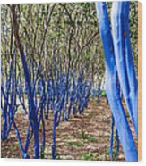 Blue Trees In Nature Wood Print