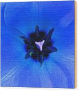 Blue Tulip Wood Print