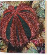 Blue Tuxedo Sea Urchin Wood Print