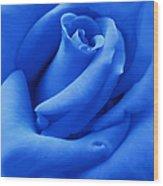 Blue Velvet Rose Flower Wood Print by Jennie Marie Schell