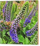 Blue Veronica Flowers   Digital Paint Wood Print