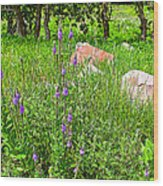 Blue Vervain And Rocks In Pipestone National Monument-minnesota  Wood Print
