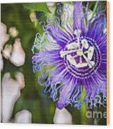 Blue Violet Wood Print