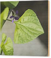 Blue Violet With Triangles Wood Print by Rebecca Sherman