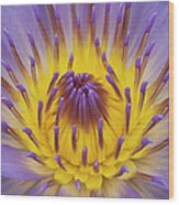 Blue Water Lily Wood Print by Heiko Koehrer-Wagner