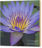 Blue Water Lily - Nymphaea Wood Print by Heiko Koehrer-Wagner