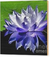 Blue Water Lily Reflection Wood Print