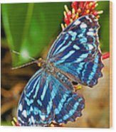 Blue Wave Butterfly Wood Print
