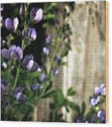 Blue Wild Indigo - Baptisia Australis Wood Print