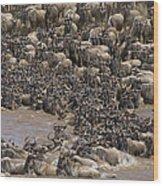 Blue Wildebeest Migration Wood Print