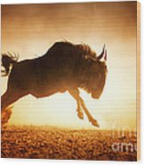 Blue Wildebeest Running In Dust Wood Print
