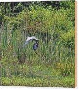 Blue Winged Heron 2013 Wood Print