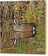 Blue-winged Teal Drake Wood Print