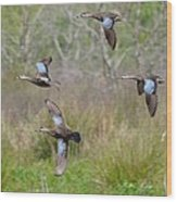 Blue Winged Teal Ducks In Flight Wood Print