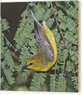 Blue-winged Warbler Wood Print