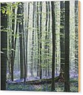 Bluebell Forrest 1 Wood Print