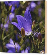 Bluebell Wood Print