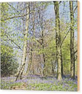 Bluebell Time In England Wood Print