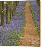 Bluebell Trail Wood Print