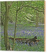 Bluebell Wood 1 Wood Print