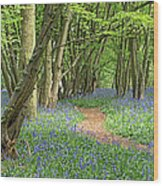 Bluebell Wood 3 Wood Print
