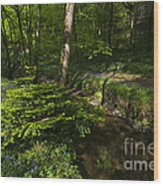 Bluebell Wood Wood Print