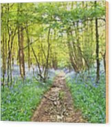 Bluebell Wood Watercolour Wood Print