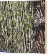 Bluebell Woodland Wood Print
