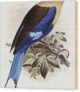 Bluebellied Roller Wood Print by Johan Gerard Keulemans