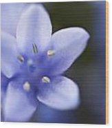 Bluebells 4 Wood Print