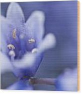 Bluebells 5 Wood Print