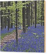 Bluebells In Beech Forest Wood Print