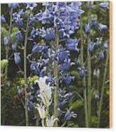 Bluebells 8 Wood Print