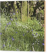 Bluebells And Greater Stitchwort Spring  Boot Eskdale Cumbria England Wood Print