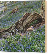 Bluebells At Bransdale Wood Print