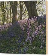 Bluebells Backlit Wood Print