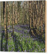Bluebells In May Wood Print