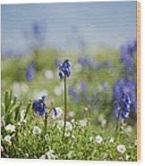Bluebells In Sea Campion Wood Print