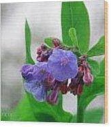 Bluebells In The Rain Wood Print