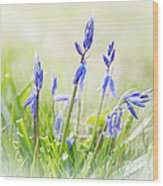 Bluebells On The Forest Wood Print