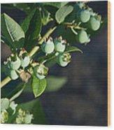 Blueberry Branch Wood Print