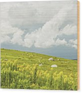Blueberry Field And Goldenrod With Dramatic Sky In Maine Wood Print by Keith Webber Jr